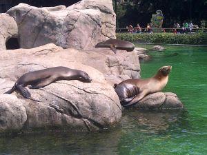 Zoo Bronx Nova York